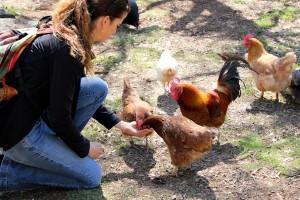 Animal Place Farm Sanctuary Meatout