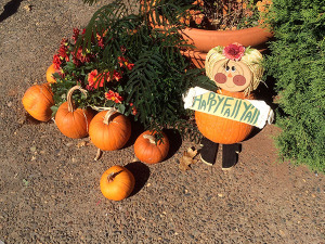 Scenes from Apple Hill