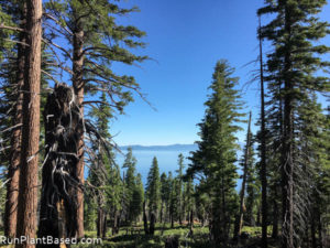 South Lake Tahoe Camping